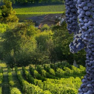Visiter Bordeaux et séjourner dans un appart'hôtel Victoria Garden - Dégustation de vin