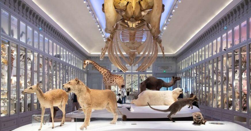 museum d'histoire naturelle bordeaux